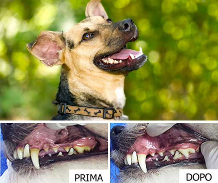 Pulizia denti cane con ultrasuoni Milano