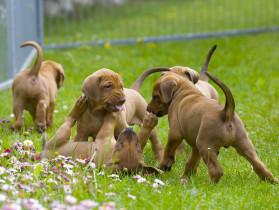 vendita-cuccioli-cani