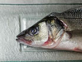 ristorante-pesce-milano