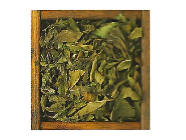 Menta Piperita in foglie immagine 0
