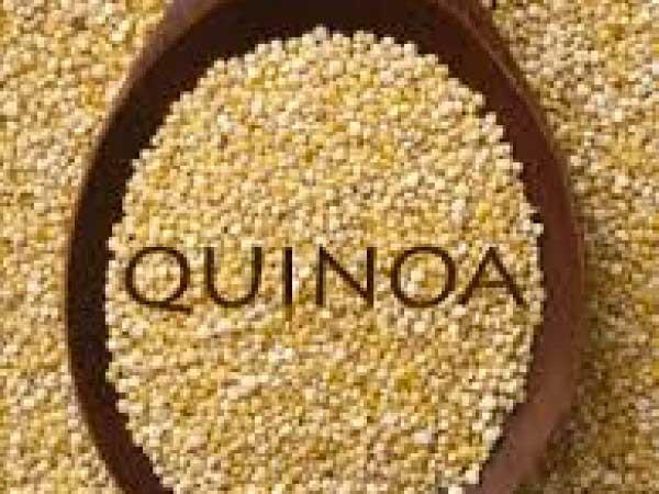 Muffin Quinoa e Cioccolato 6pz immagine 2