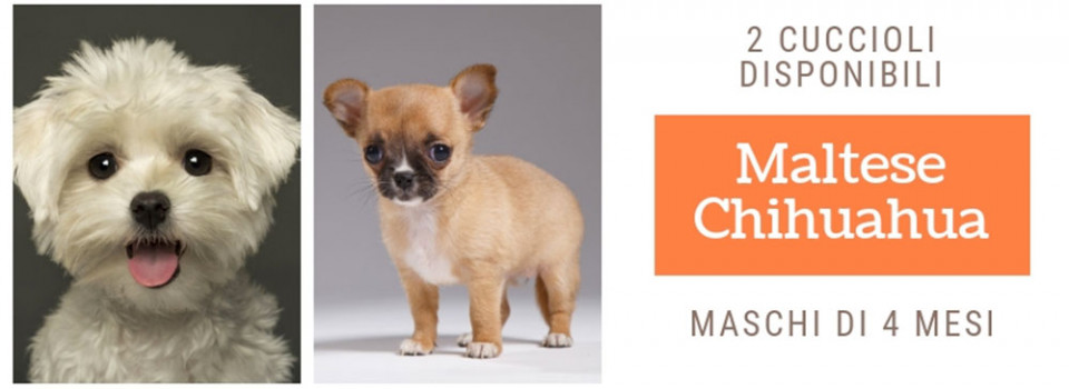 big-river-baloo_slide_0